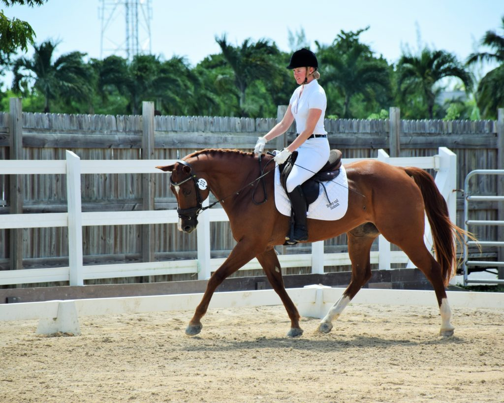 Winners of the T3 Dressage Section – Stephanie Lloyd riding Rolex