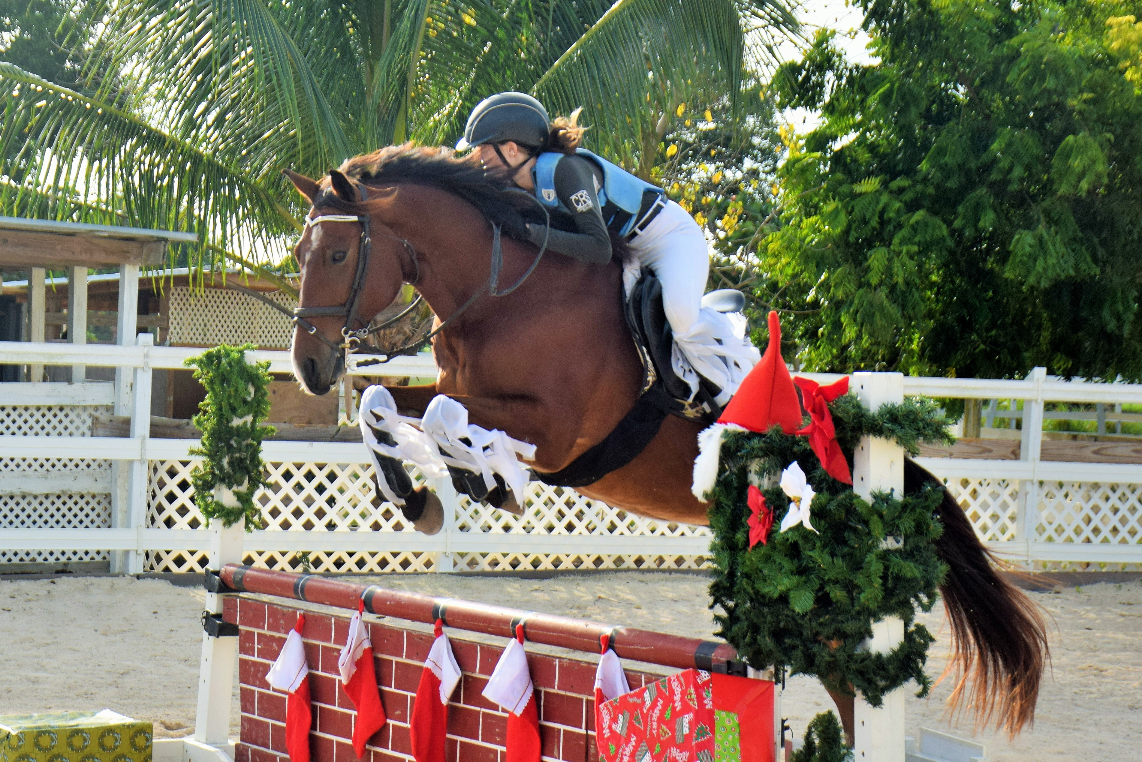 Festive Mood At Christmas Horse Show Cayman Sports Buzz